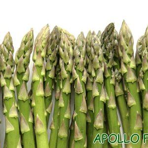 Hạt giống măng tây APOLLO F1