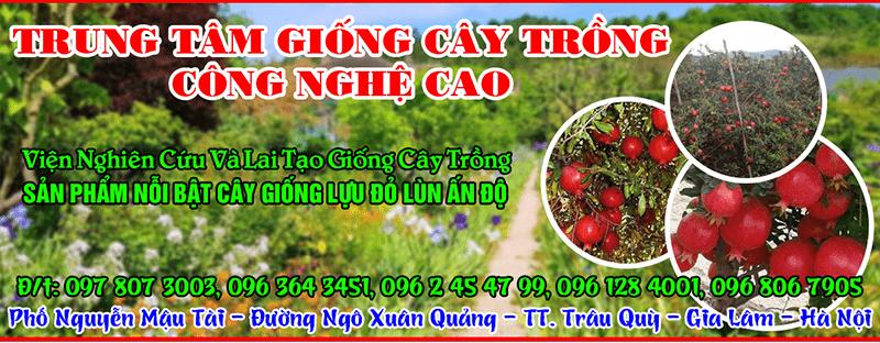 Trung tâm chuyển giao công nghệ và hợp tác trang trại VietGap cung cấp hạt giống măng tây chất lượng